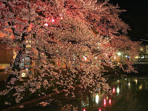 城崎温泉の桜並木のライトアップ・城崎の夜景/豊岡市