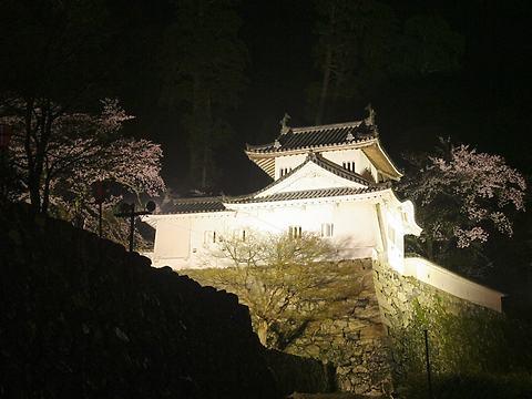 出石城の桜と夜桜・出石城ライトアップ/豊岡市