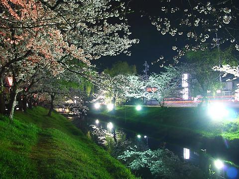 鹿島川の桜並木と夜桜ライトアップ/高砂市