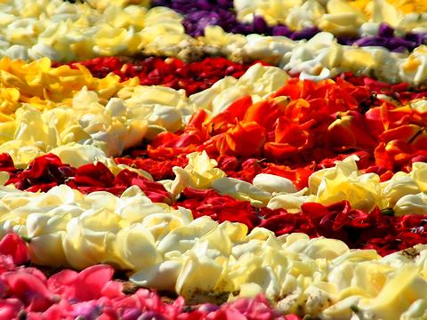 北野坂異人館街のチューリップの花絵・インフィオラータこうべ/神戸市中央区