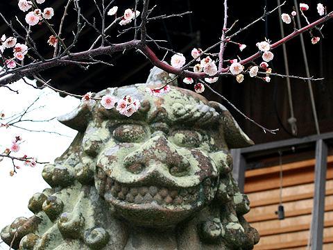 八房の梅と狛犬・柿本神社/明石市