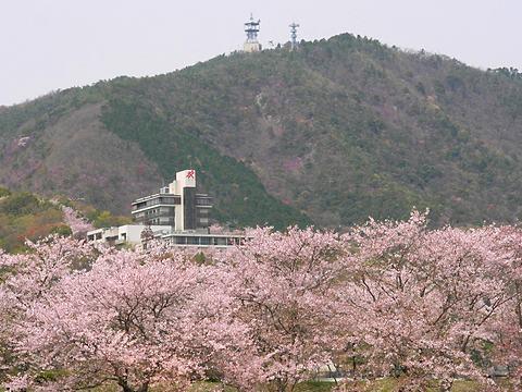 揖保川の桜並木と赤とんぼ荘/たつの市