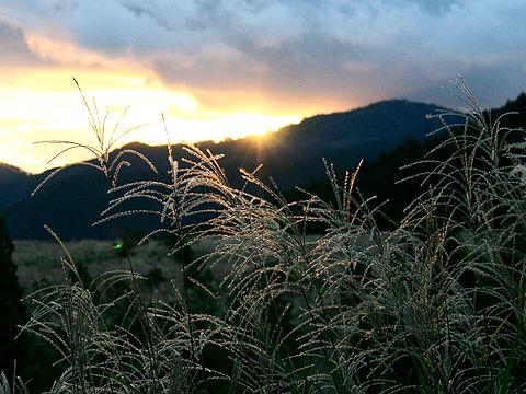 秋の夕焼け空とススキ/神河町・砥峰高原