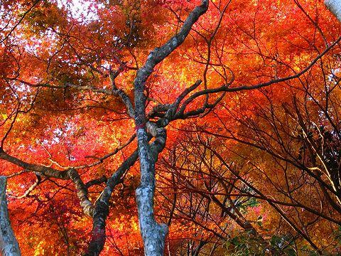伽耶院の紅葉/三木市