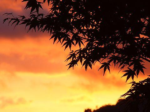 秋の夕焼け空とモミジ/神河町・砥峰高原