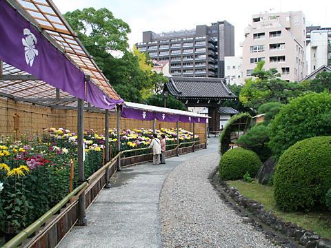 神戸菊花展・相楽園日本庭園/神戸市