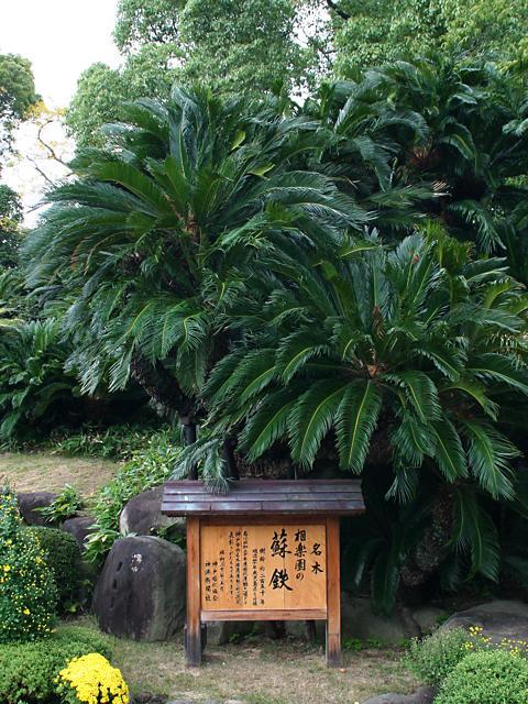 相楽園の蘇鉄園/神戸市
