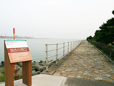 高砂海浜公園白砂青松の松林(播州松めぐり)/高砂市