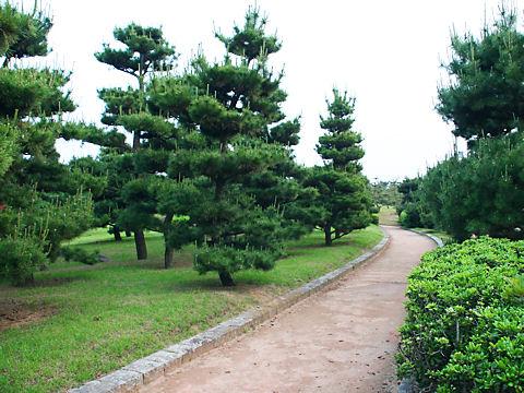 K高砂海浜公園白砂青松の松林(播州松めぐり)/高砂市