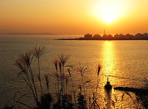 小赤壁のススキと瀬戸内海に沈む夕日/姫路市
