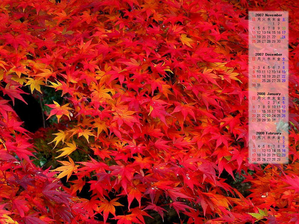 紅葉壁紙カレンダー2007.11~2008 ...