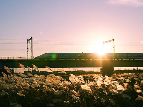 加古川の夕日に輝くススキとJR山陽新幹線