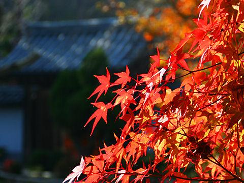 伽耶院の紅葉