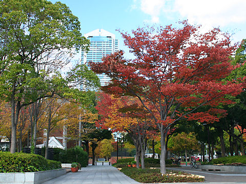 神戸東遊園地の紅葉と神戸市役所