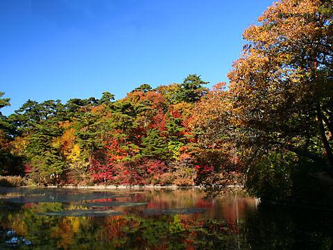 長谷池に映る森林植物園の紅葉