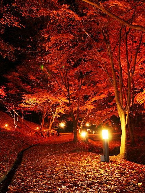 もみじののライトアップ夜景・東山公園もみじまつり
