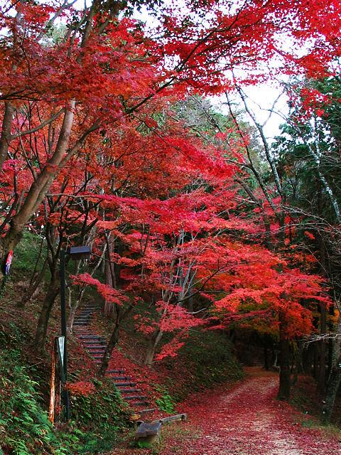 最上山・もみじ山の紅葉