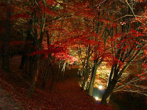 紅葉ライトアップ夜景・最上山もみじ山