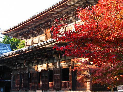 大講堂とモミジの紅葉