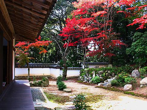 十妙院の日本庭園とモミジの紅葉