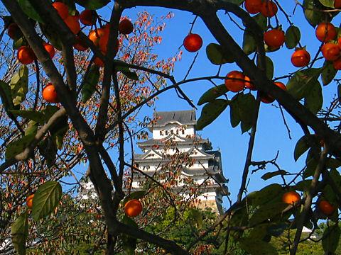 姫路城と柿の実