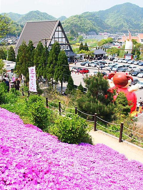 ヤマサ蒲鉾芝桜の小道