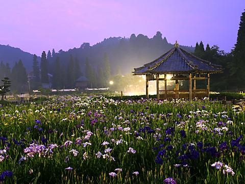 永沢寺花菖蒲園ライトアップ夜景