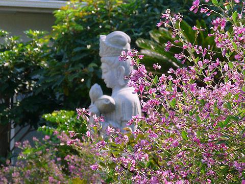 ハギ(萩)の花