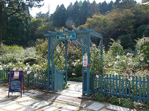 六甲山のバラ園
