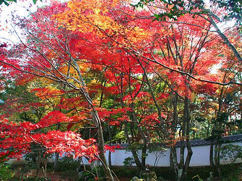 紅葉の写真画像