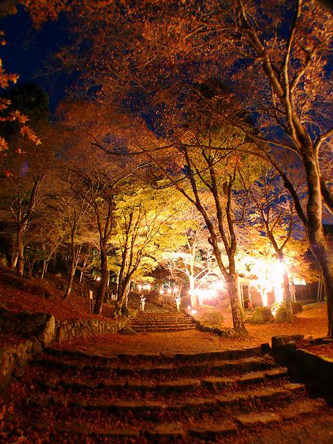紅葉のライトアップ写真画像
