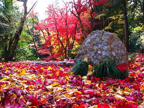 篠山の紅葉