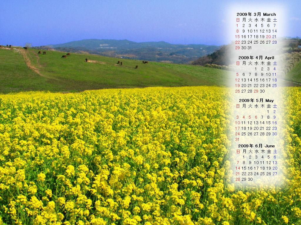菜の花 3月無料壁紙カレンダー 兵庫と神戸の写真ブログ
