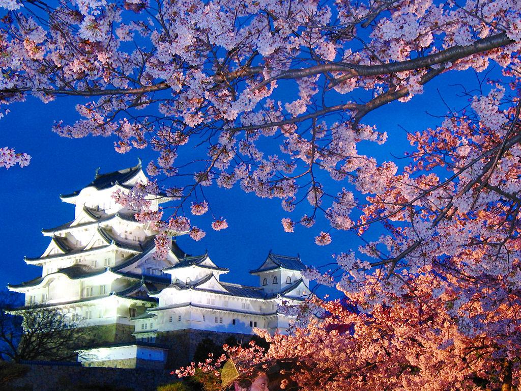 壁紙 桜のライトアップ 夜桜 ぶらり兵庫 ぶらり神戸 神戸の観光情報とイベント情報 楽天ブログ