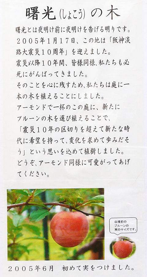 Toyonut_014