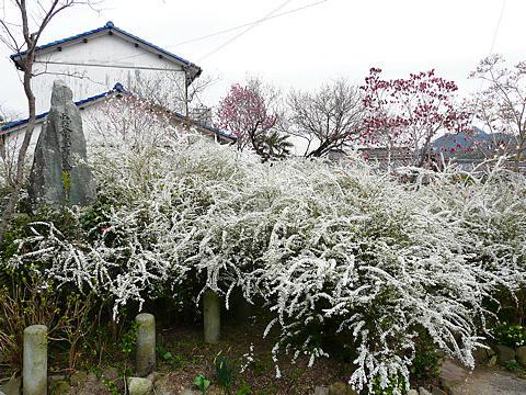 Ensyouji_001