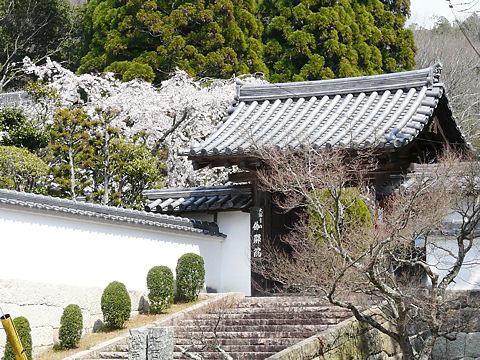 Sakura_000