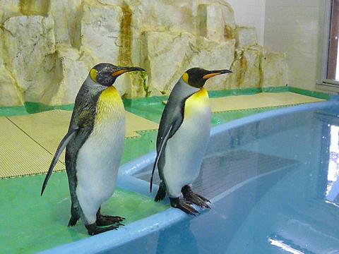 Penguin_001_2