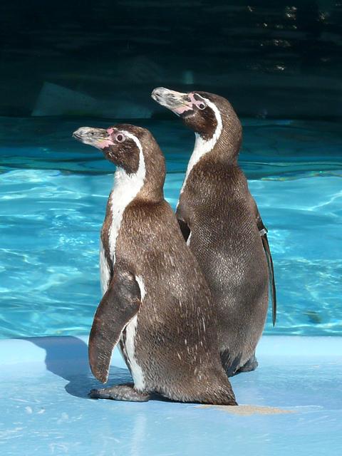 Penguin_002