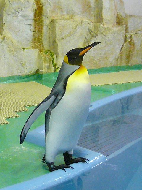 Penguin_002_2