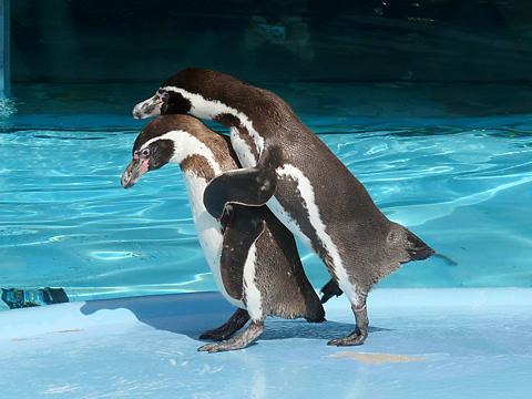 Penguin_003