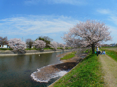 Chidorigawa_004