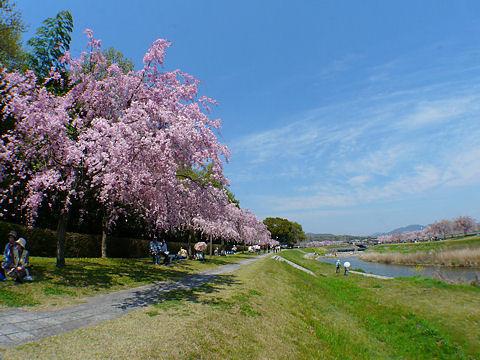 Chidorigawa_005