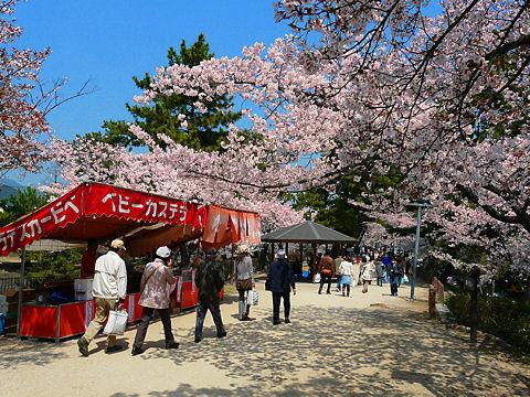 西宮さくら祭・夙川公園の花見