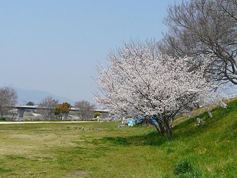 Mukogawa_002_3