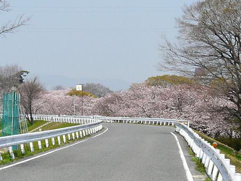 Mukogawa_002_4
