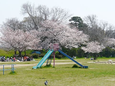Mukogawa_006