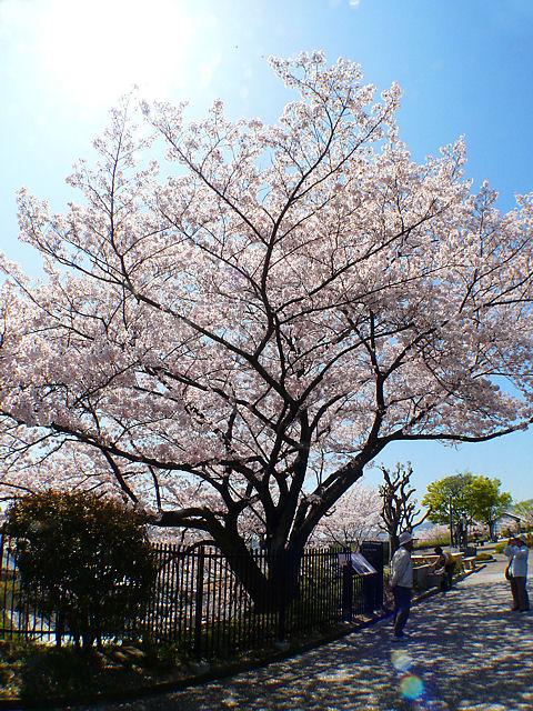 Mizunokagakukan_090423_0152