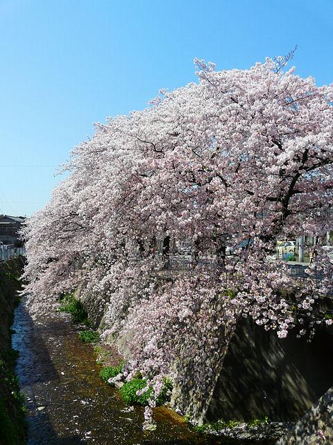 Ujigawa_002