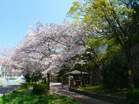Ujigawa_003